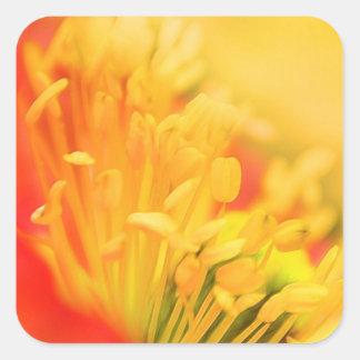 Close Up - Iceland Poppy Square Sticker