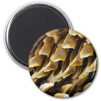 Close Up Image Of A Cone Magnet