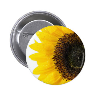Close Up Image Of Sunflower Button