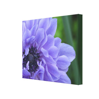 Close-up Indigo Poppy Flower Canvas Print