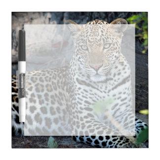 Close up leopard portrait sitting Dry-Erase board