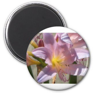 Close Up Light Pink Lily 2 Inch Round Magnet