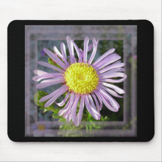 Close Up Lilac Aster With Bright Yellow Centre Mouse Pad