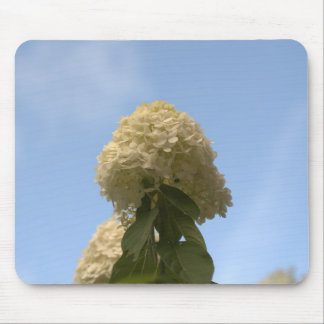 Close-up Lime Hydrangeas pointing to sky Mousepad