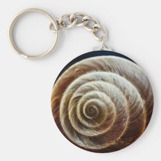Close-Up Look Of Snail Shell Keychain