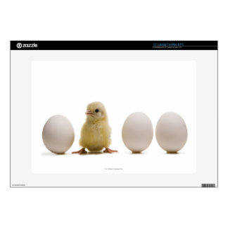 """Close-up of a baby chick with three eggs 15"""" laptop skin"""