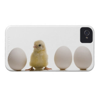 Close-up of a baby chick with three eggs iPhone 4 Case-Mate case