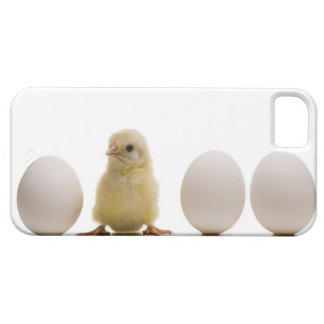 Close-up of a baby chick with three eggs iPhone SE/5/5s case