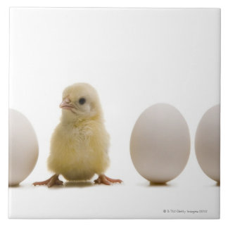Close-up of a baby chick with three eggs ceramic tile