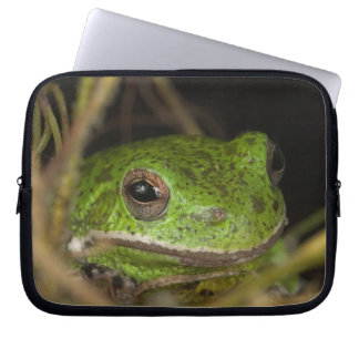 Close-up of a Barking treefrog on limb resting Laptop Computer Sleeve