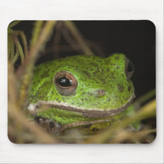 Close-up of a Barking treefrog on limb resting Mouse Pad
