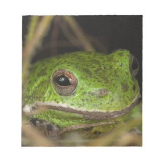 Close-up of a Barking treefrog on limb resting Notepad