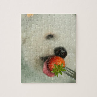 Close-up of a Bichon Frise eating a strawberry Jigsaw Puzzle