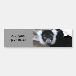 Close up of a Black and White Ruffed Lemur Bumper Stickers