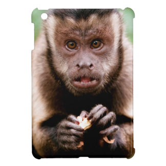 Close-up of a black-capped capuchin monkey case for the iPad mini