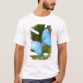 Close up of a Blue Morpho Butterfly on a palm T-Shirt
