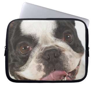Close-up of a Boston Terrier sticking out its Laptop Sleeve
