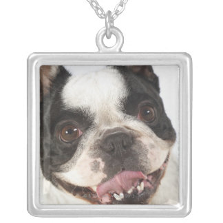 Close-up of a Boston Terrier sticking out its Square Pendant Necklace