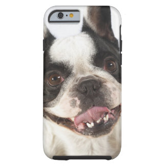 Close-up of a Boston Terrier sticking out its Tough iPhone 6 Case