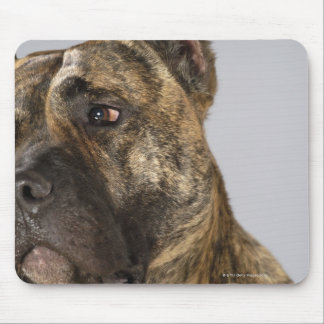 Close-up of a Boxer Mouse Pad