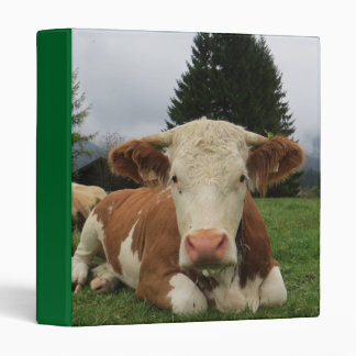 Close up of a brown and white cow laying down 3 ring binder