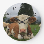 Close up of a brown and white cow laying down wallclocks