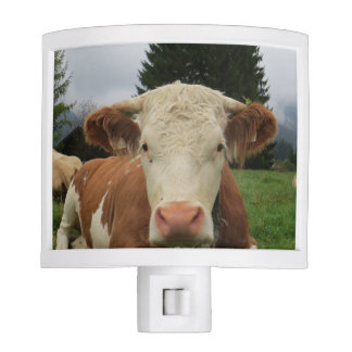 Close up of a brown and white cow laying down night light