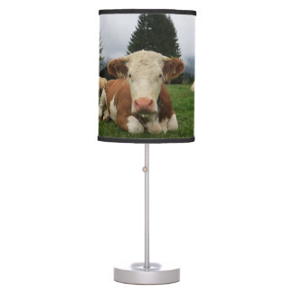 Close up of a brown and white cow laying down desk lamp