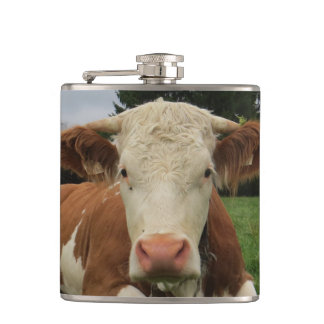Close up of a brown and white cow laying down hip flask