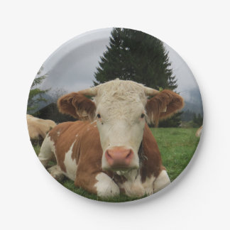 Close up of a brown and white cow laying down paper plate