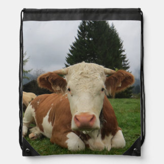 Close up of a brown and white cow laying down backpack