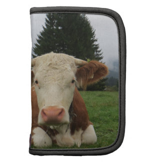 Close up of a brown and white cow laying down organizer