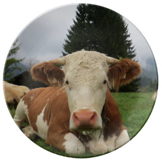 Close up of a brown and white cow laying down porcelain plate