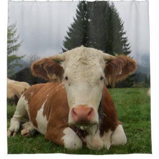 Close up of a brown and white cow laying down shower curtain