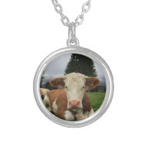 Close up of a brown and white cow laying down silver plated necklace
