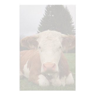 Close up of a brown and white cow laying down stationery