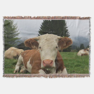 Close up of a brown and white cow laying down throw blanket
