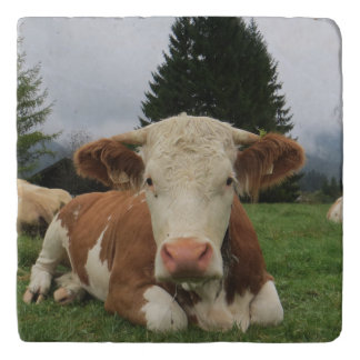 Close up of a brown and white cow laying down trivet