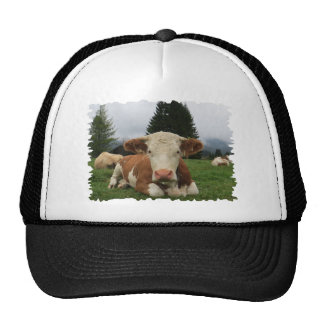 Close up of a brown and white cow laying down trucker hat