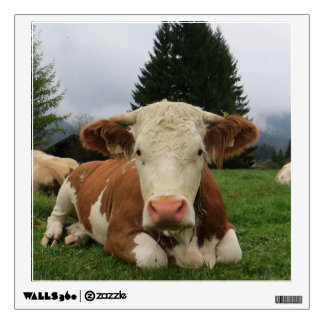 Close up of a brown and white cow laying down wall decal
