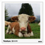 Close up of a brown and white cow laying down room graphics