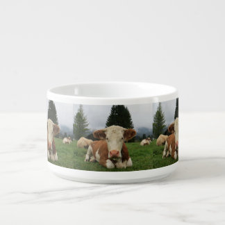 Close up of a brown and white cow laying down chili bowl