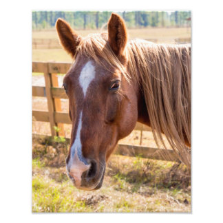Close-Up of a Brown Horse on a Farm Photograph
