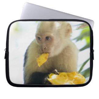 Close-up of a capuchin monkey eating a fruit computer sleeve