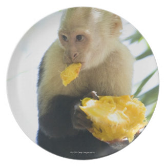Close-up of a capuchin monkey eating a fruit dinner plate