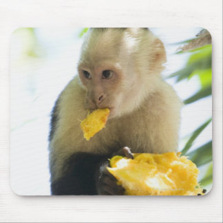 Close-up of a capuchin monkey eating a fruit mouse pad