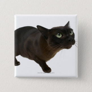 Close-up of a cat 2 pinback button