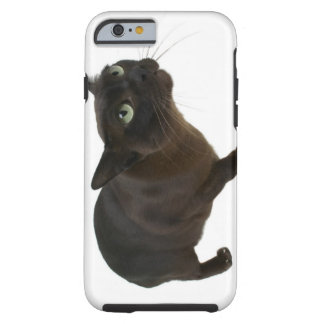 Close-up of a cat 2 tough iPhone 6 case