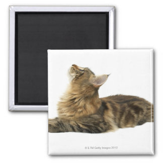 Close-up of a cat 3 2 inch square magnet