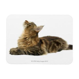 Close-up of a cat 3 rectangular photo magnet